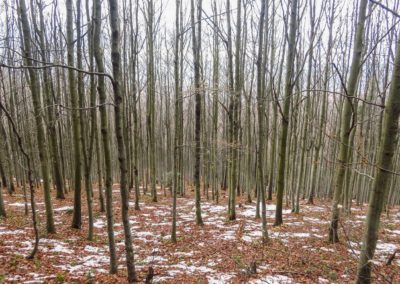 beskid-wyspowy-2016-11-18-20-44